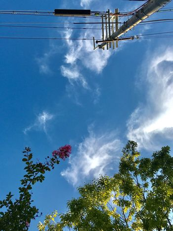 Low Angle View Sky Cloud - Sky Tree Day Outdoors No People Blue Growth Nature Beauty In Nature