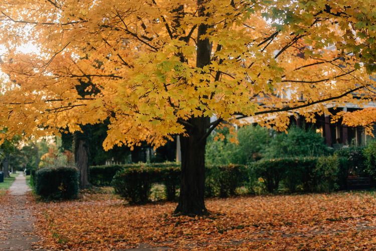 This Is Strength Autumn Tree Change Plant Leaf Plant Part Nature Beauty In Nature Yellow No People Outdoors Maple Tree Day Orange Color Park Park - Man Made Space Growth Land Tranquility Architecture Autumn Collection Maple Leaf Fall