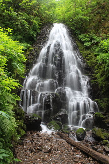 Beauty In Nature Fairy Falls Oregon Perfect Water Perfect Waterfall Pic Perfect Waterfall Picture Water Waterfall