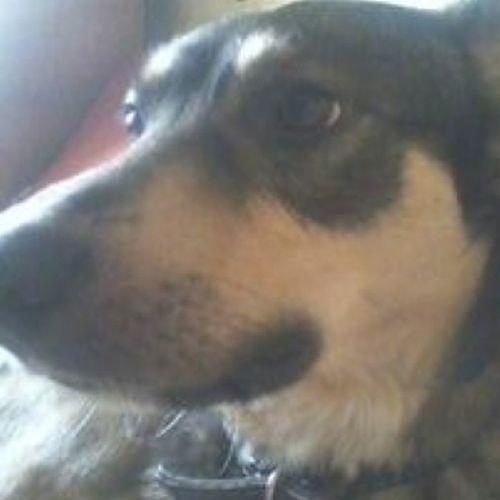 моя собака смотрит вдаль