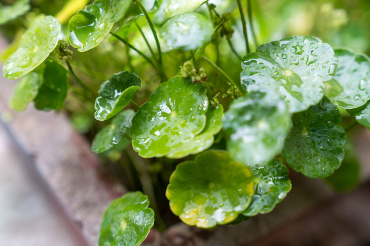 Close-up of dew on outdoor leaves Backgrounds Close-up Dew Early Morning Environment Field Garden Green Landscape Leaves Local Macro Material Morning Nature Park Planting Plants Textured  Verdant Water Water Drop Water Spirits Yellow Green Color Freshness No People Food And Drink Food Leaf Plant Selective Focus Vegetable Healthy Eating Plant Part Wellbeing Drop Wet Beauty In Nature Growth Vegetarian Food RainDrop