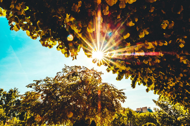 Beauty In Nature Blue Sky Branch Day Green Color Green Leaves Growth Leaf Leaves Lens Flare Low Angle View Nature No People Outdoors Scenics Sky Sun Sun Through The Trees Sunbeam Sunlight Sunray Sunrays Tranquil Scene Tranquility Tree