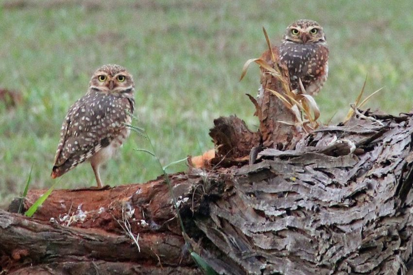 Outdoors Nature Owls Animal Themes