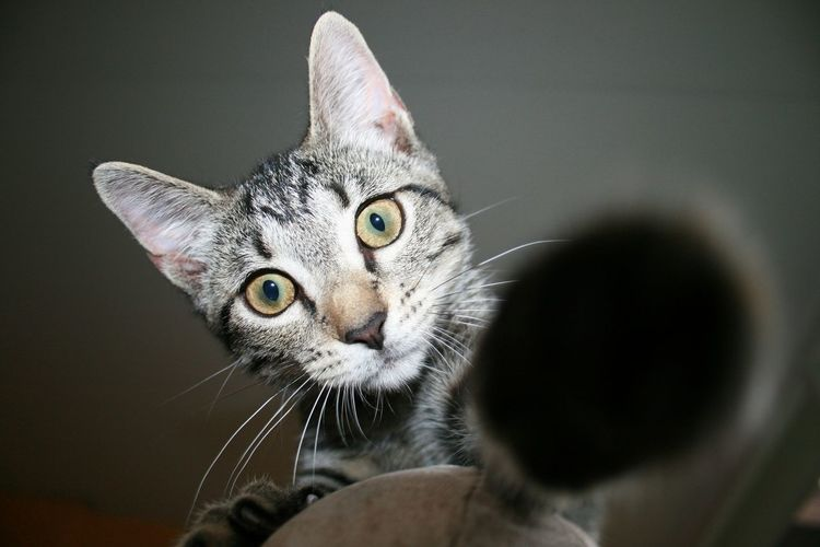 Low Angle View Portrait Of Cat