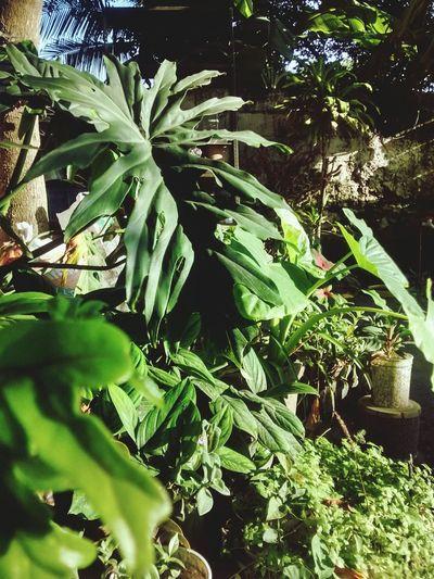 La naturaleza de mi patio