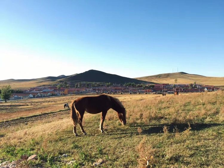 the town in Hebei province Domestic Animals Horse Landscape Mountain One Animal Clear Sky Outdoors Day