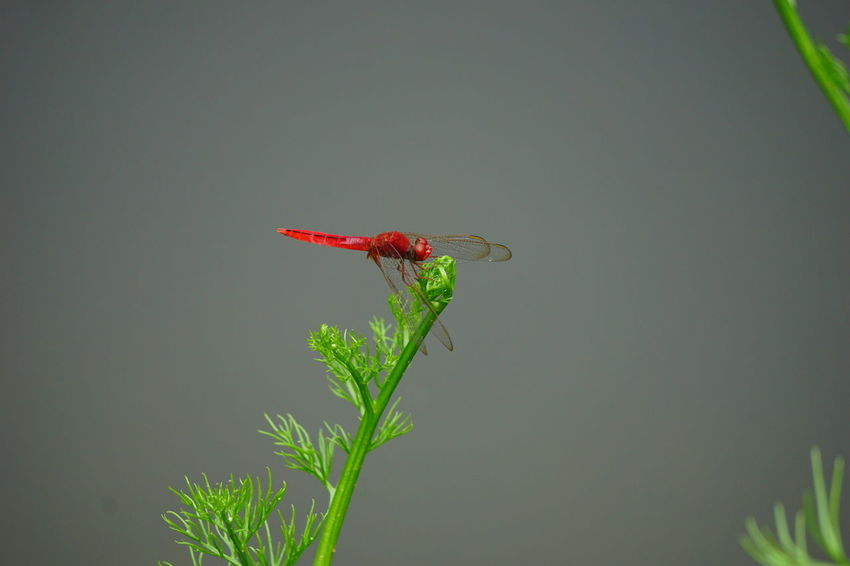 #Dragonfly Animals In The Wild Beauty In Nature Green Color Nature Outdoors