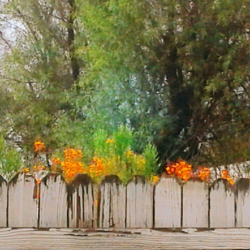 Orange Color Tree Flower No People Outdoors Day Nature Plant White Fence Weathered Fence Stormy Weather Summer Landscape Blooming Still Life Petal Arizona Shrubbery Sky Tree Nature