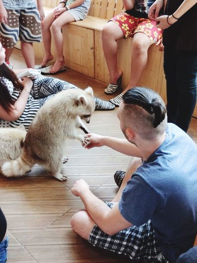 Raccoon Animals Touch Meeting Friends Relationship Cute Happytime Relaxing