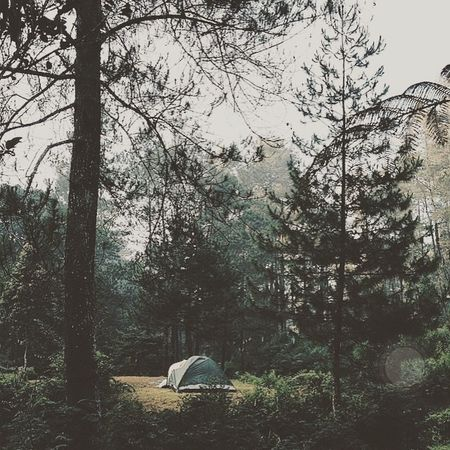 Forest Nature Camping