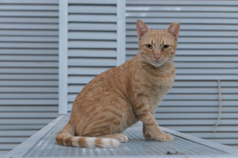 Portrait of cat sitting on shutter