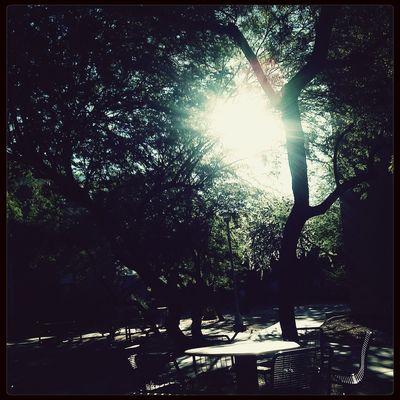 Morning Light Collegelife