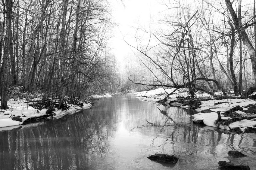 Bare Tree Beauty In Nature Black And White Photography Blackandwhite Blackandwhite Photography Cold Temperature Forest Frozen Ladscape Landscape_Collection Lanscape Nature Reflection River Season  Snow Stream Tranquil Scene Tranquility Tree Uppsala, Kvarnbo Uppsala, Sweden Water Winter