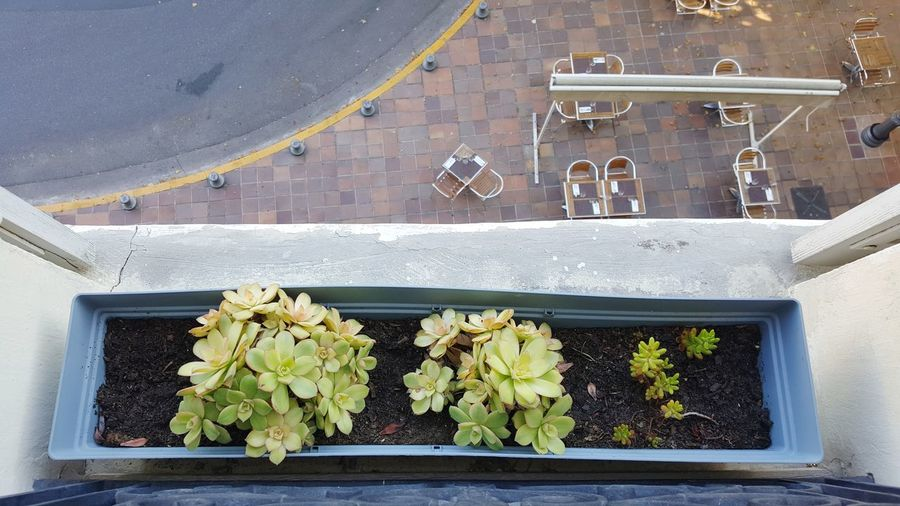 High angle view of plant box looking over balcony