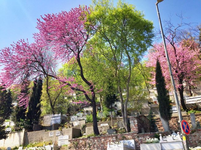 Tree No People Nature Growth Beauty In Nature Day Flower Tranquility Branch Pink Color Outdoors Sky Springtime Scenics