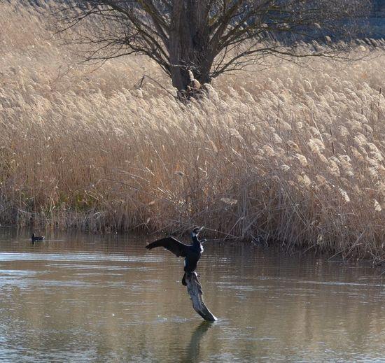 Reserva Natural De Sebes, Flix