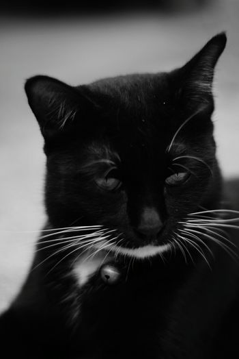 BLackCat 50mm 1.7 Minolta Lens