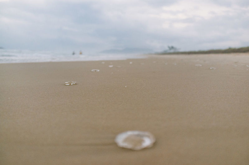 Beach Beauty In Nature Brazil Close-up Cloud Day Florianópolis Jellyfish Landscape Nature No People Outdoors Sand Scenics Sea Sky Tranquil Scene Tranquility Water