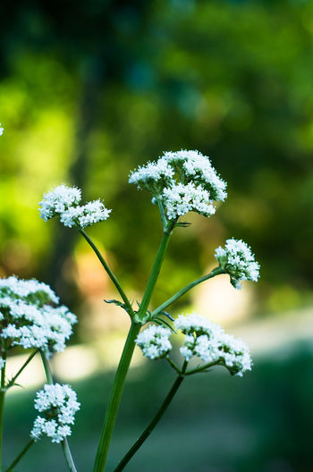 Beauty In Nature Blooming Close-up Day Flower Flower Collection Flower Head Flowers Fragility Freshness Growth Nature No People Outdoors Petal Plant White Color