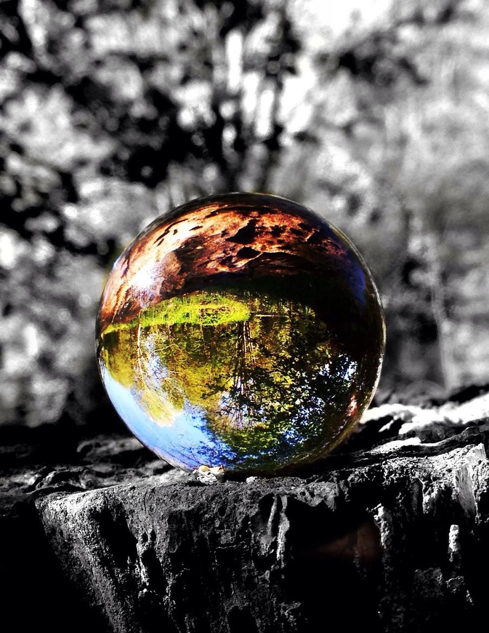 sphere, close-up, reflection, no people, outdoors, fragility, tree, day, nature, beauty in nature