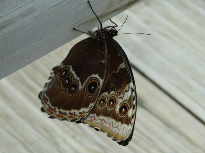 Animal Themes Animal Wildlife Animals In The Wild Beauty In Nature Butterfly - Insect Close-up Day Insect Nature No People One Animal Outdoors