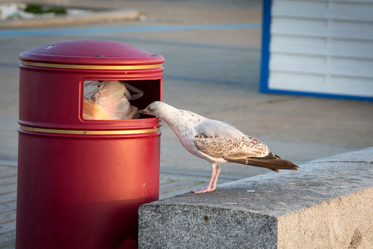 Close-up of seagull perching on wall