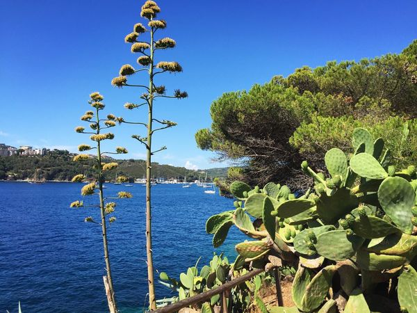 Nature Water Beauty In Nature Growth No People Plant Blue Clear Sky Tranquility Day Tree Scenics Sea Outdoors Mountain Leaf Sky Italy Isola D'Elba  Porto Azzurro Kaktus Kakteen
