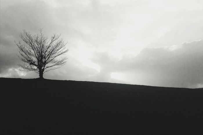 Back on Eyeem Blackandwhite Streetphotography Bw_collection Nature