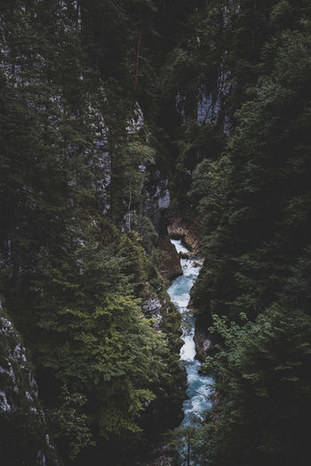 Water Waterfall Scenics - Nature Flowing Water Beauty In Nature Nature No People Outdoors Dark Forest River Stream Flower Hiking View From Above Pine Trees Bayern Bavaria Alps Travel Travel Photography