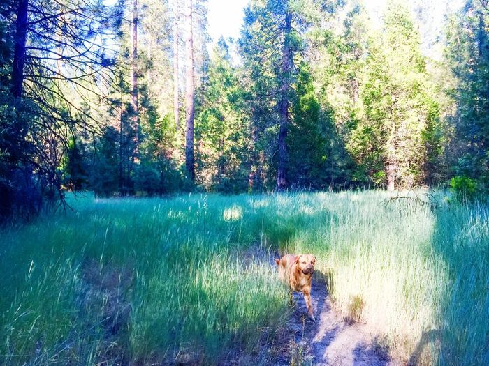 Dogslife Nature Photography Forest Freedom