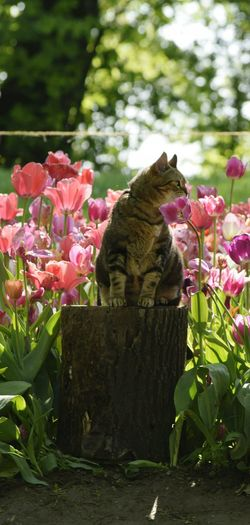 Flower Nature Outdoors Plant No People Day Beauty In Nature Rhododendron EyeEmNewHere Springtime Nature Beauty Close-up Freshness Flower Head Beauty In Nature Plant Backgrounds Flowerbed Tulip Multi Colored Cat Cats Of EyeEm
