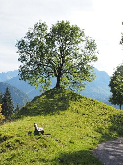 Tree on field against sky