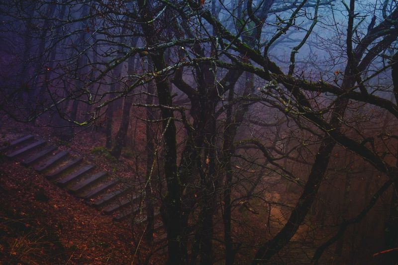 Forest Forestphotography Winterforest Rainyforest Mist Foggy Landscape Landscape Trees Branches Afternoon Thenightiscoming RedLeaves Steps Path Nature Bare Tree No People Outdoors