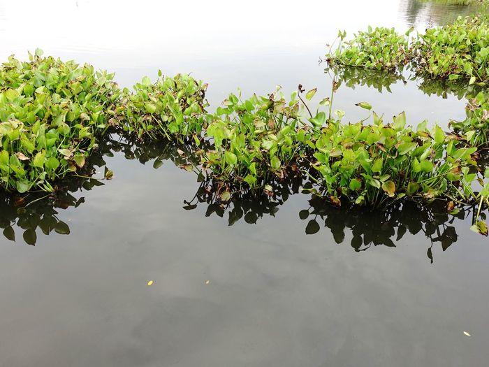 Leaves floating on water against sky