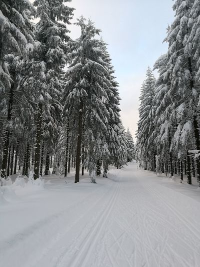 Tree Snow Winter Cold Temperature Nature Landscape Beauty In Nature Outdoors Loipe Erzgebirge