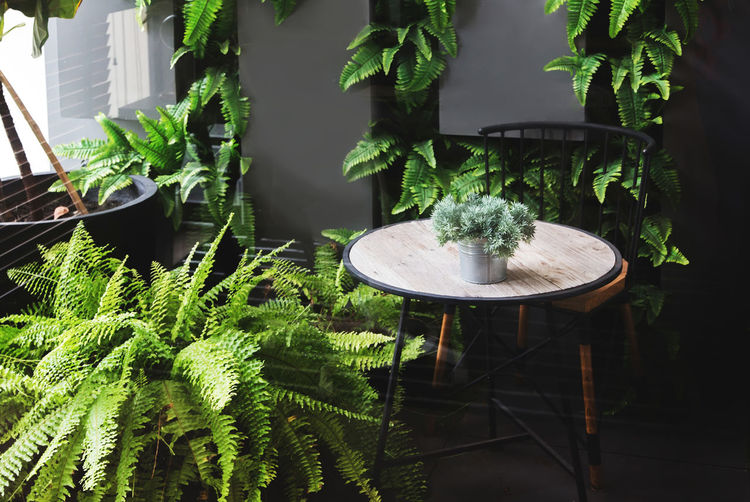 Potted plants on table in yard