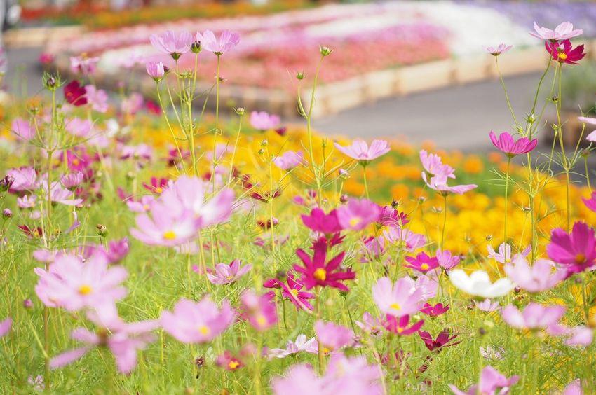 うめきたガーデン Flower Beauty In Nature Pink Color Nature Blossom Enjoying Life EyeEm Nature Lover Orange Color Garden