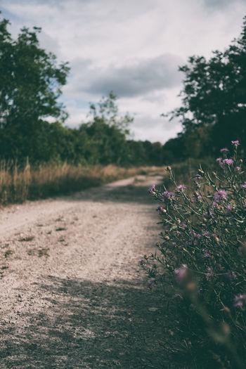 Purple Flowering Plants On By Footpath