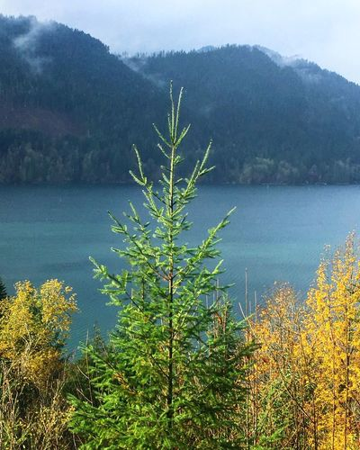 Lone tree Nature Tree Mountain Scenics Beauty In Nature Lake Plant Outdoors Tranquility No People Landscape