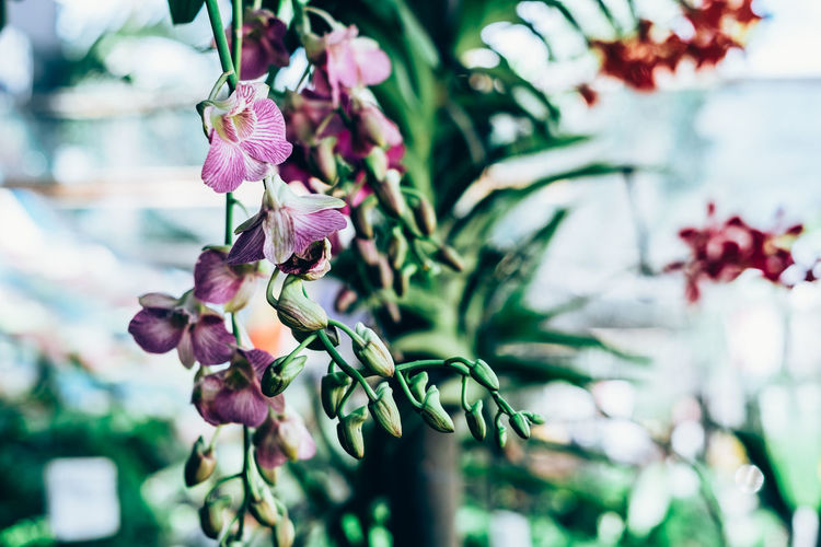 hanging orchids Copy Space Exotic Gardening Hanging Orchid The Week On EyeEm Backgrounds Beauty In Nature Bokeh Branch Close-up Day Delicate Flower Flower Head Focus On Foreground Fragility Freshness Greenhouse Growth Nature Outdoors Petal Pink Color Plant