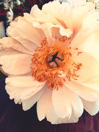 Roses Pfingstrosen EyeEm Selects Flower Flowering Plant Petal Beauty In Nature Plant Flower Head Nature Pollen Vulnerability  Growth
