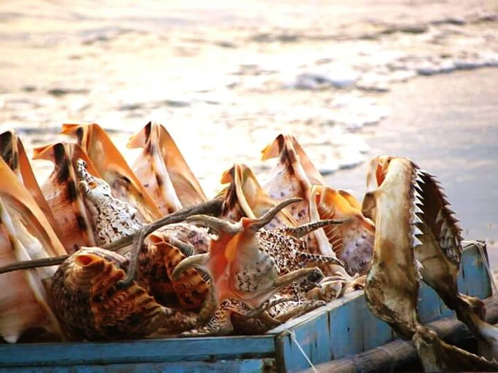 A walk in a beach.. Relaxing Enjoying Life Taking Photos Seaside Sea Shells 🐚 Sea_collection Seashells, Sand And Water Seashore Sea Shell Collection EyeemPhilippines Itsmorefuninthephilippines