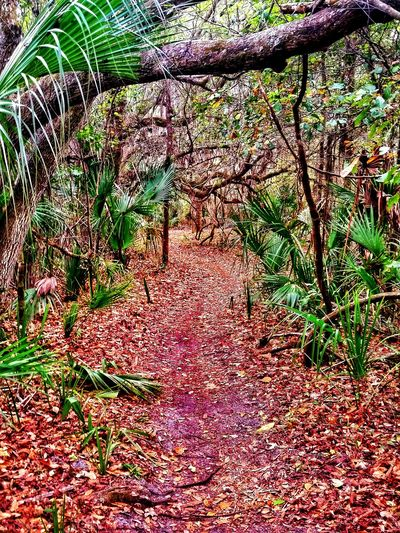 Following a new path to somewhere awesome... Walking Around Getting In Touch Escaping Hiking Nature_collection