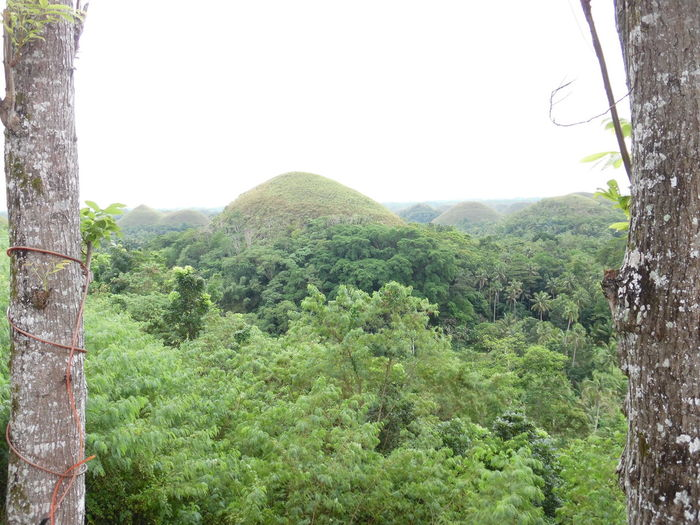 After the rain - Chocolate Hills Bohol Beauty In Nature Chocolate Hills Chocolate Hills Bohol Philippines Day Exotic Nature EyeEm Nature Lover Eyeem4photography Forest Green Color Growth Hillside Landscape Landscape Low Angle View Lush Foliage Nature No Edit/no Filter No People Outdoors Palm Trees Philippines Photos Plant Scenics Capture The MomentTranquil Scene Tropical Climate