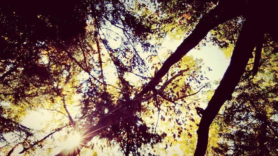 Autumn Colors ?
