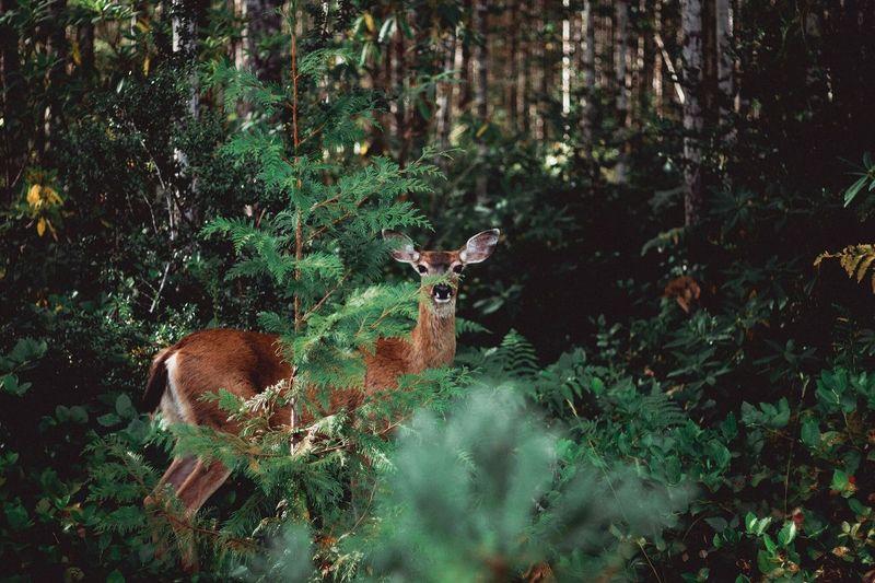 This deer was