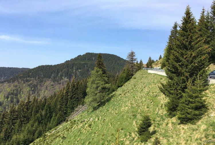 Mountain Road Coniferous Tree Plant Growth Sky Beauty In Nature Tranquility Tree Nature No People Tranquil Scene Day Field Agriculture Landscape Green Color Environment Cloud - Sky Scenics - Nature Land Sunlight Crop