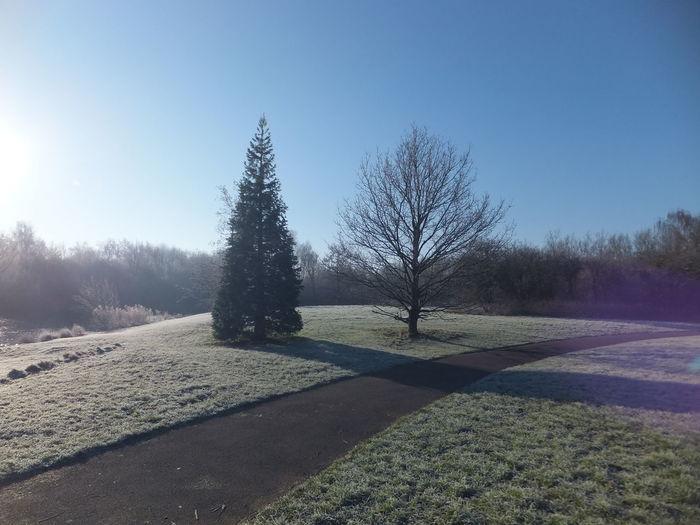 A Developer's Dream Winter Trees Tranquillity Frozen Swindon England Scene