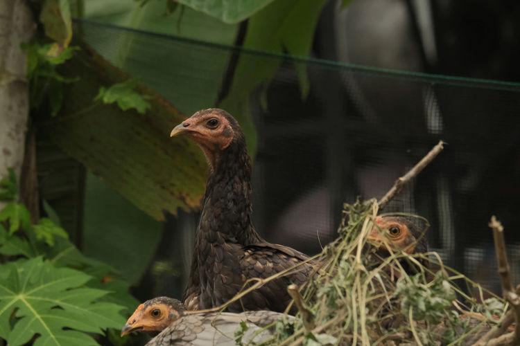 View of birds in nest
