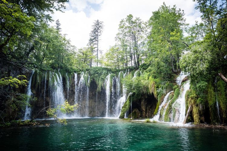 Plitvice lake Plant Plitvice National Park Water Tree Plant Nature Motion Beauty In Nature Waterfall Scenics - Nature Waterfront Flowing Water Falling Water